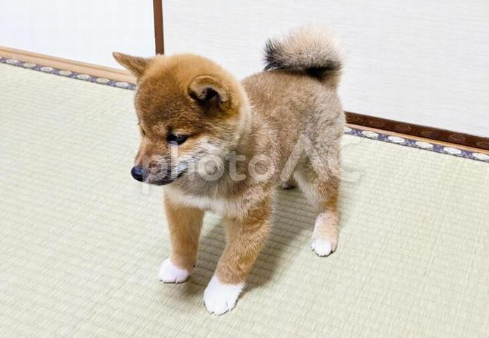 可愛い愛犬の写真