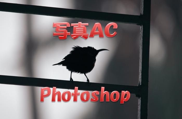 写真ACで稼ぐためにPhotoshop独学のオススメの本を紹介