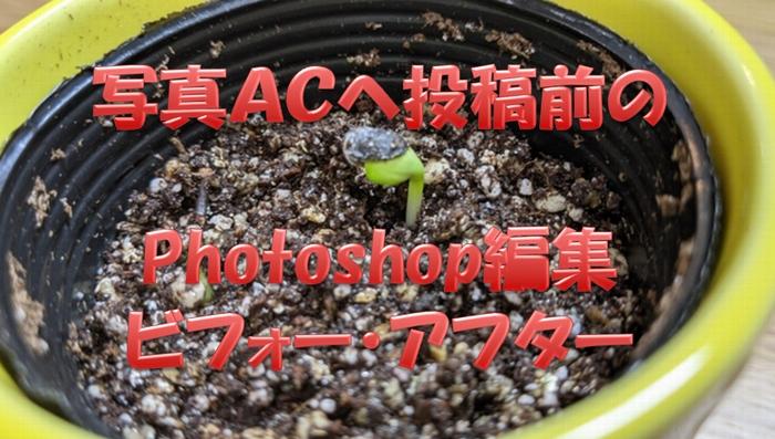 写真ACへ投稿前にPhotoshop編集した写真のビフォーアフター