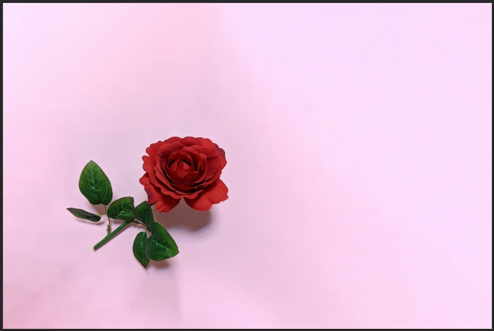茎を切り取ったバラ