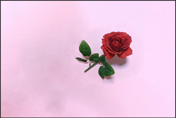 バラの花を移動